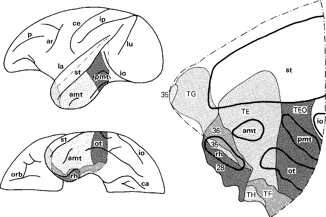 Connections of inferior temporal areas TE and TEO with medial ...