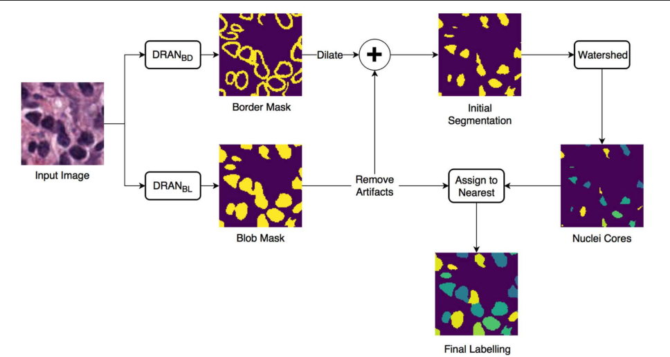 Figure 1 for Methods for Segmentation and Classification of Digital Microscopy Tissue Images