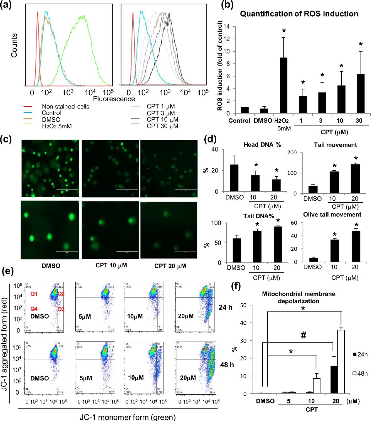 Anticancer activity of cryptotanshinone on acute lymphoblastic