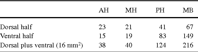 Table 2 Mean number of labelled cells within the ventromedial parts (16-mm2 square, dorsal or ventral half) of the anterior (AH), median (MH) and premammillary (PH) hypothalamus and the mammillary bodies (MB)