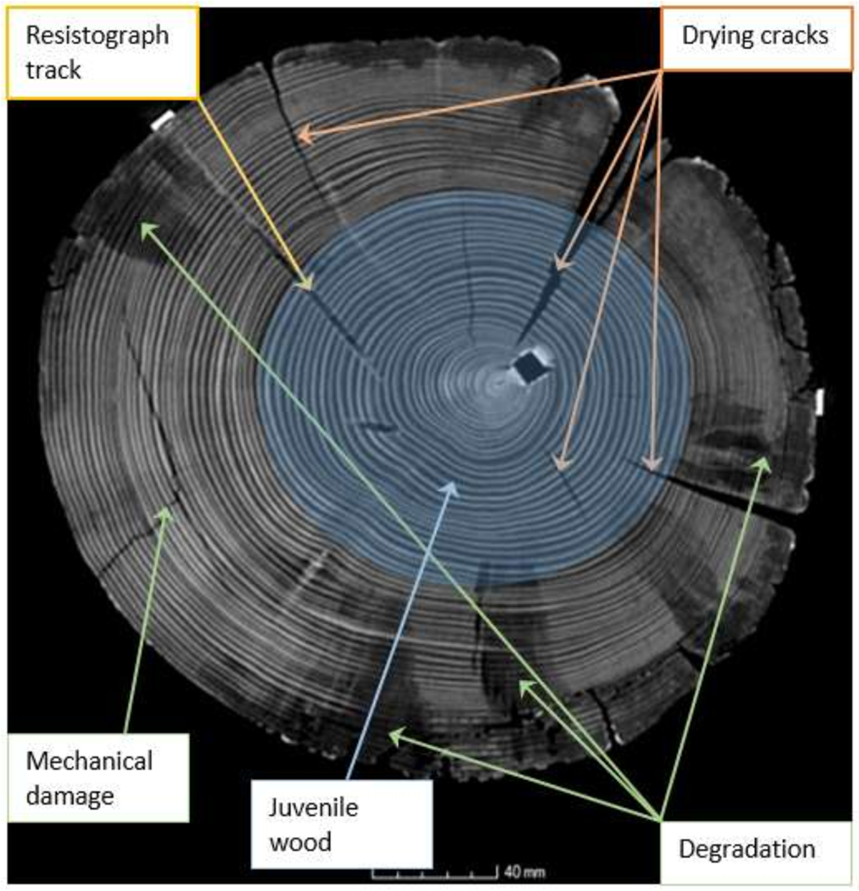 Figure 4.4 Timber properties which can be identified with CT scanning