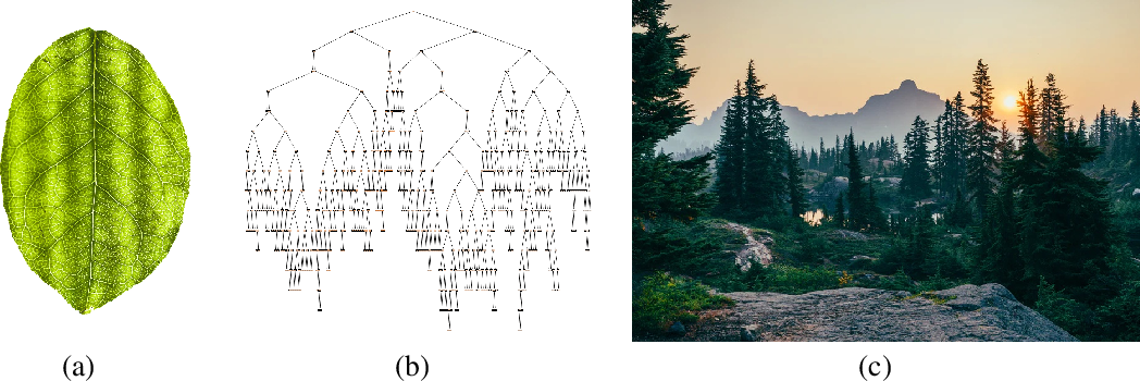 Figure 2 for On the Origin of Species of Self-Supervised Learning