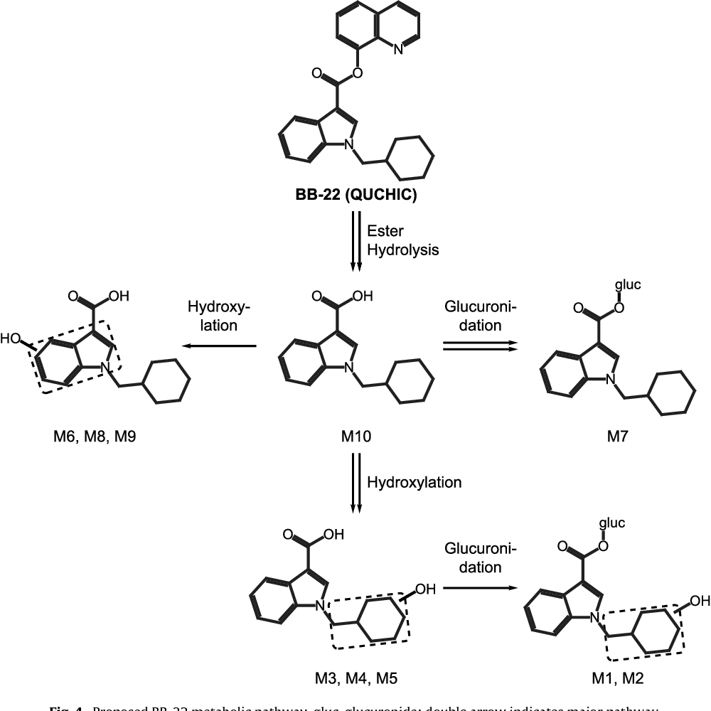 Figure 4 from Synthetic cannabinoid BB-22 (QUCHIC): Human