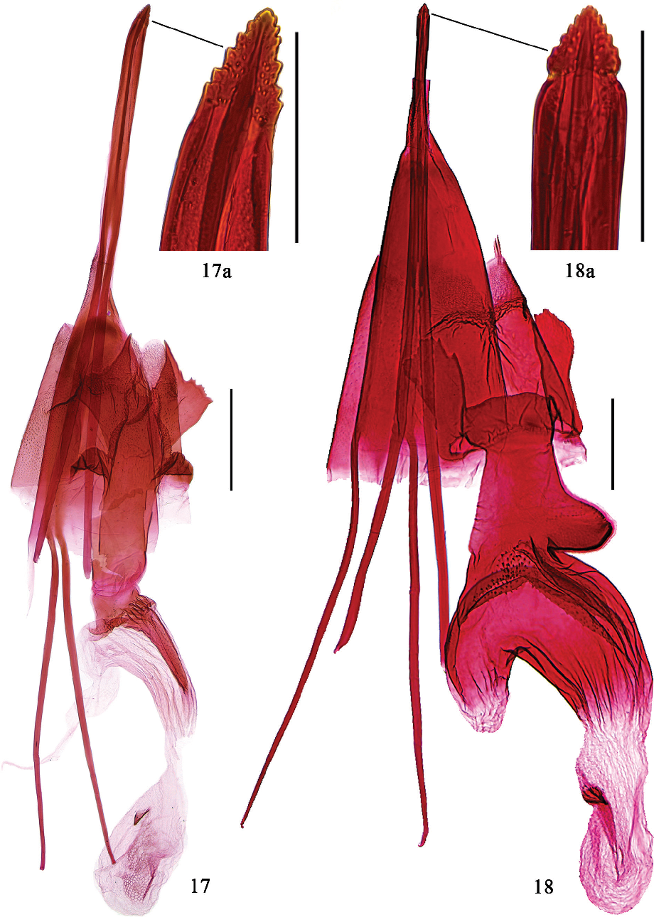 figure 17–18