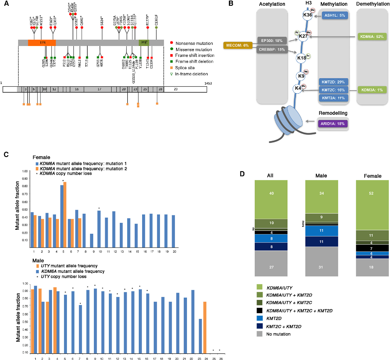 Figure 6. Mutation of Chromatin Modifier Genes and Relationship to Gender