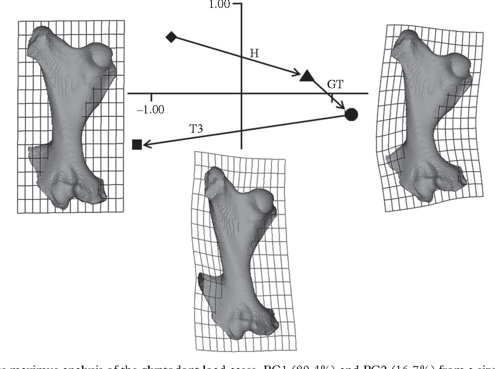 Figure 5 From Scaling Of Form And Function In The Xenarthran Femur