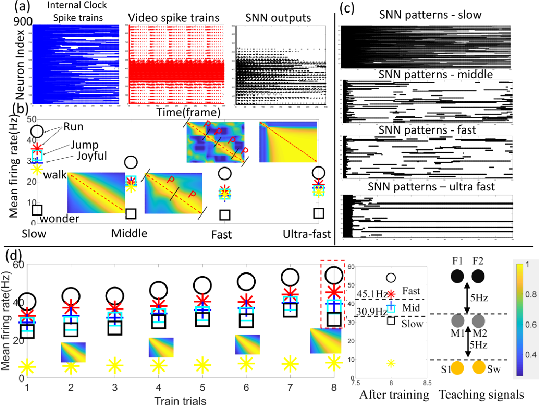 Figure 3 for An Internal Clock Based Space-time Neural Network for Motion Speed Recognition