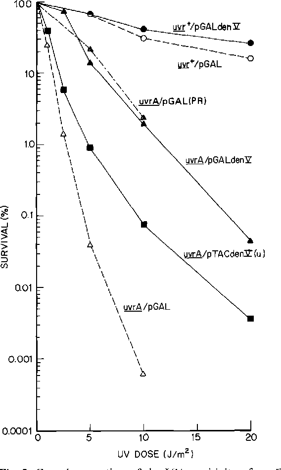 Figure 3 From Partial Complementation Of The Uv Sensitivity Of E