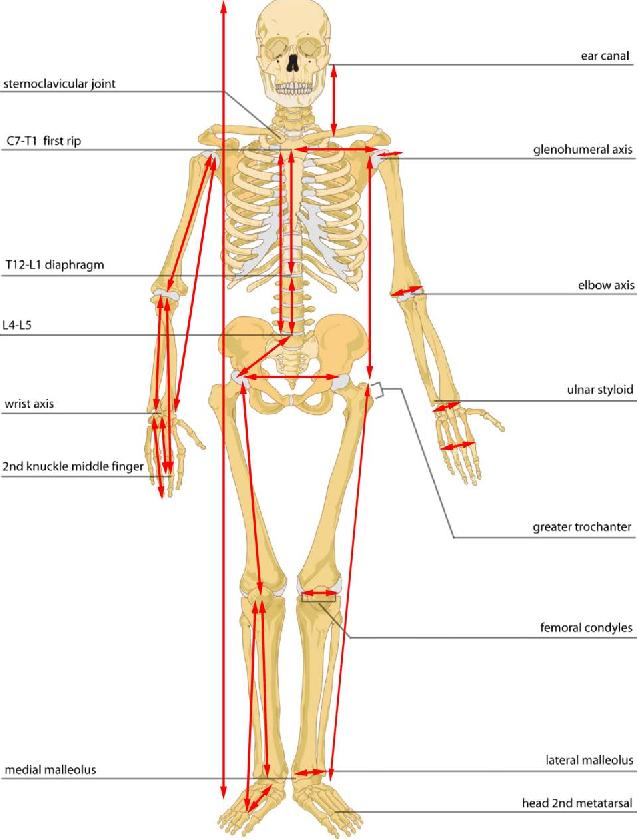 Ungewöhnlich Schenkelhernie Anatomie Galerie - Anatomie von ...