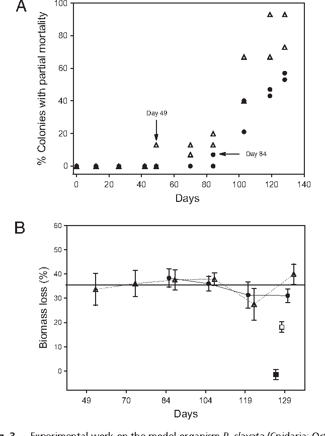Fig. 3. Experimental work on the model organism P. clavata (Cnidaria: Octocorallia). (A) Variation over time in the proportion of colonies with partial mortality under different treatments and replicates. Arrows depict appearance of thefirst signsofpartialmortality49daysand84daysafter thebeginningofthe experiment in the high-temperature–ambient-food treatment and in the hightemperature–high-food treatment, respectively. None of the colonies under either ambient temperature treatment exhibited partial mortality. (B) Percentage of biomass loss at the first appearance of partial mortality of the colonies undergoing both high-temperature treatments. Because none of the colonies in either ambient-temperature treatment displayed partial mortality, the biomass loss in these treatments was estimated as the difference in biomass between the first day and the last day of the experiment. Colonies in the ambienttemperature–high-food treatment did not display biomass loss. Solid squares, ambient-temperature–high-food; Open squares, ambient-temperature– ambient-food; . Solidcircles,high-temperature–high-food;Opentrianglescircles, high-temperature–ambient-food. Vertical bars denote SE.