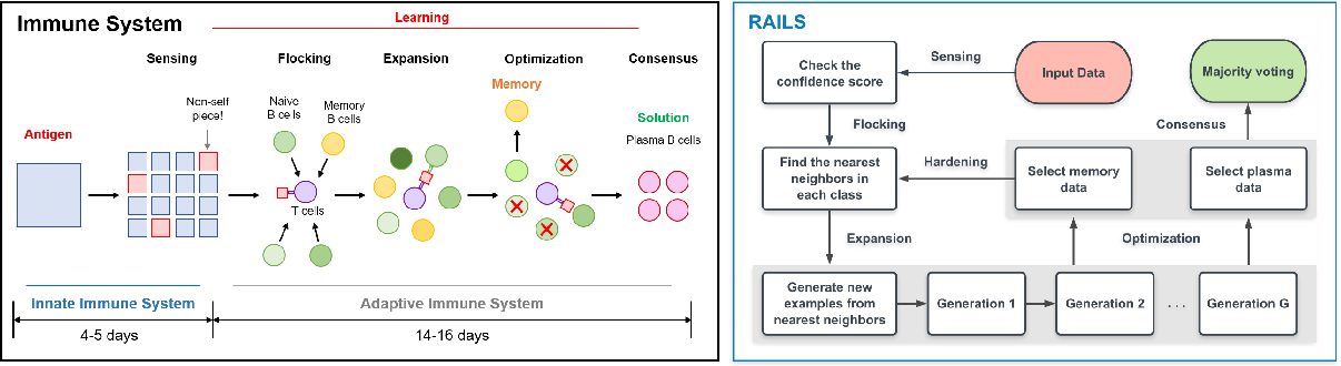 Figure 1 for RAILS: A Robust Adversarial Immune-inspired Learning System
