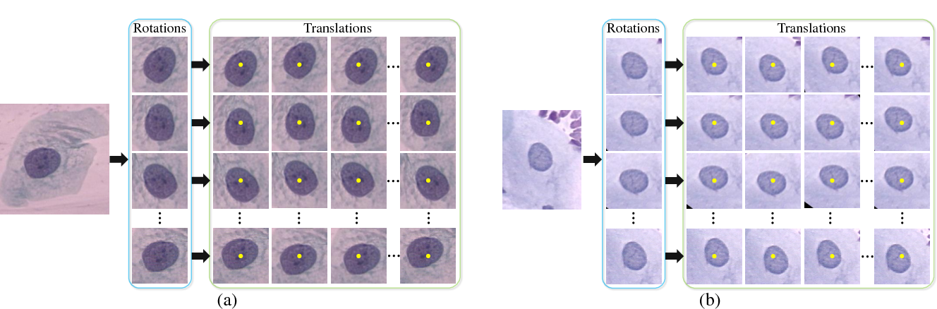 Figure 3 for DeepPap: Deep Convolutional Networks for Cervical Cell Classification