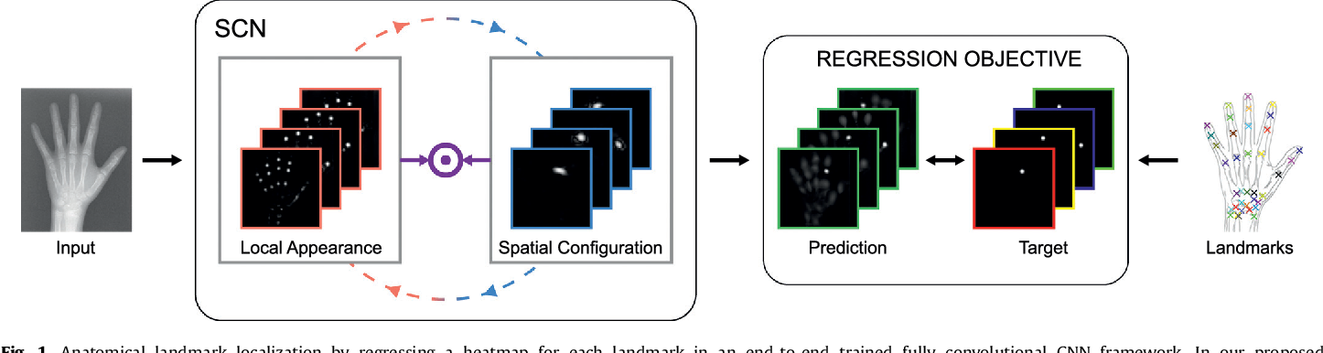 Figure 1 for Integrating Spatial Configuration into Heatmap Regression Based CNNs for Landmark Localization