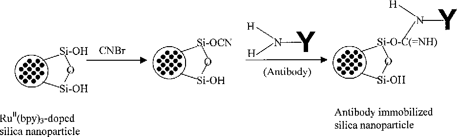 Figure 1. Schematic representation of antibody immobilization process onto the luminophore-doped silica nanoparticle's surface.
