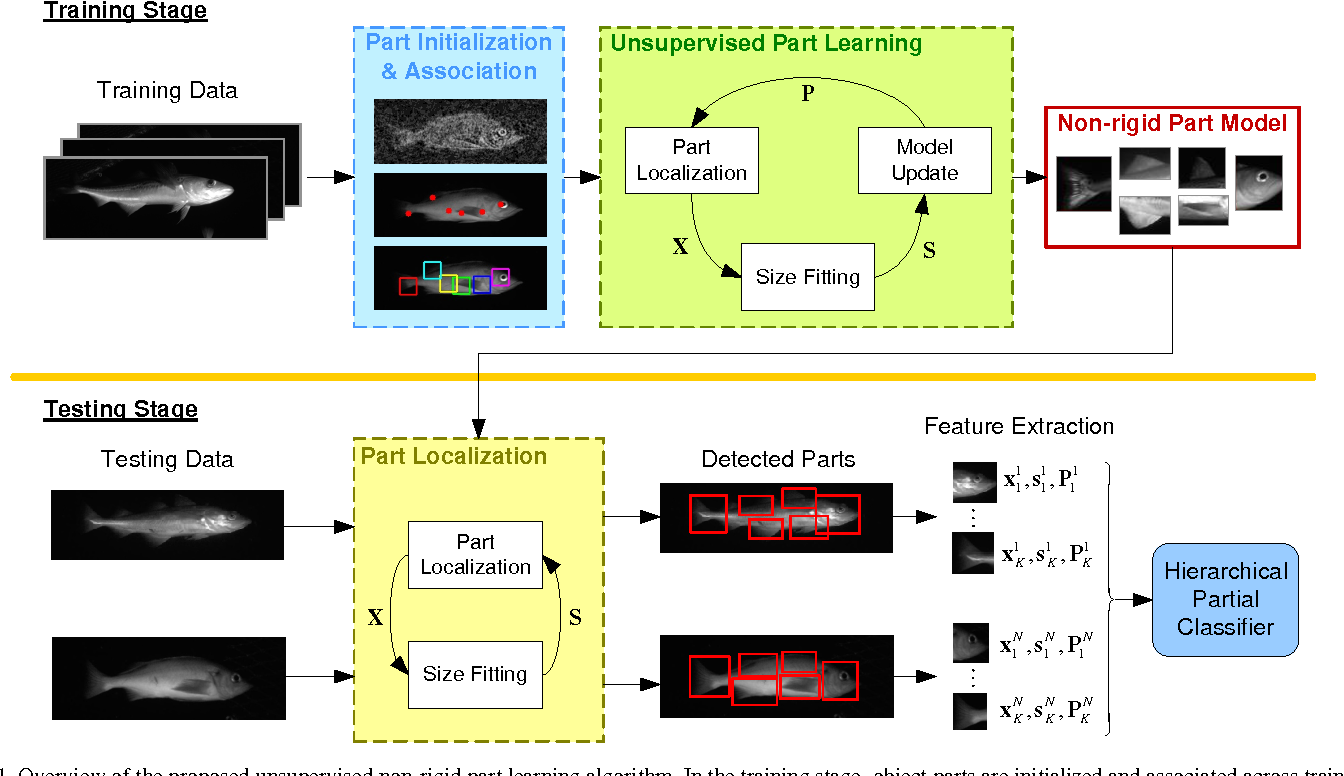 Figure 1 for A Feature Learning and Object Recognition Framework for Underwater Fish Images