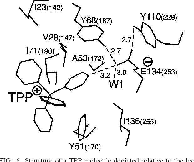 Figure 6 From Regulation Of Bacterial Drug Export Systems