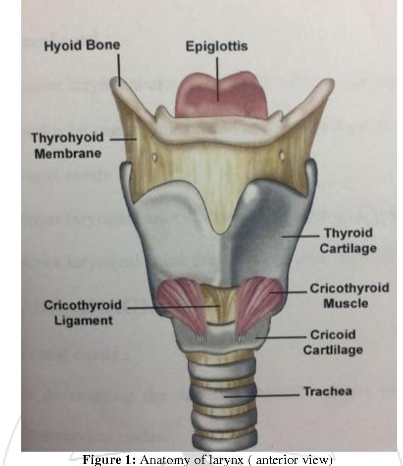 Attenuation of Cadiovascular Responses to Laryngoscopy and ...