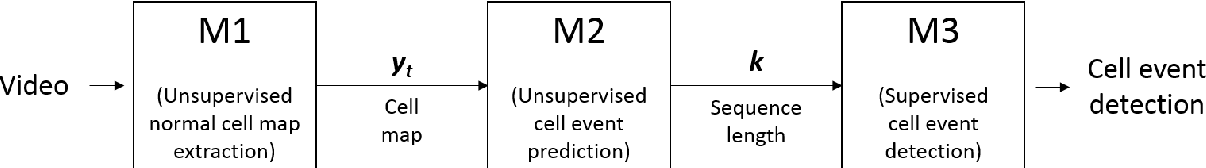 Figure 1 for Semi-supervised estimation of event temporal length for cell event detection