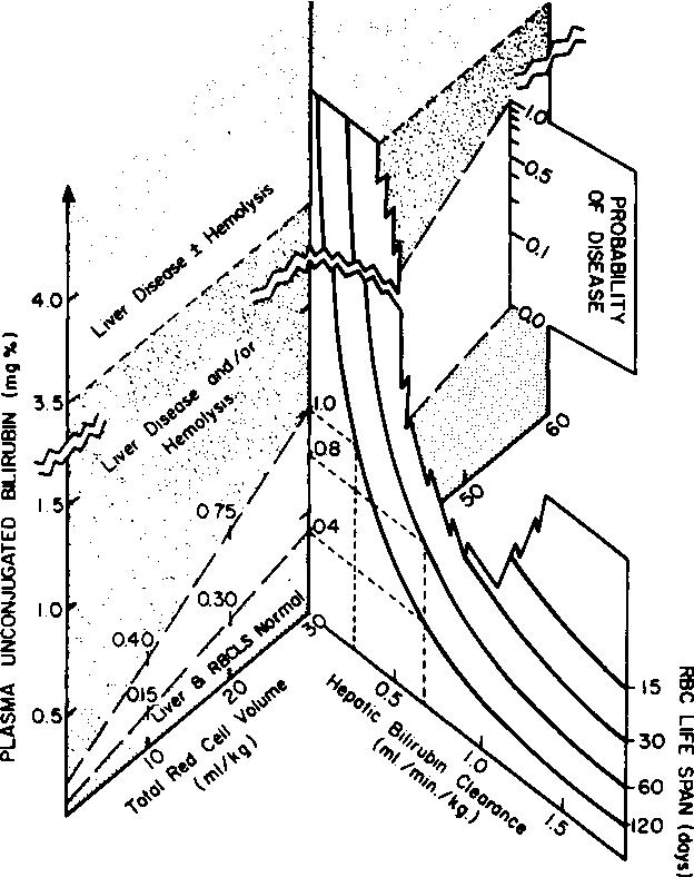 Lung Diagram Cow
