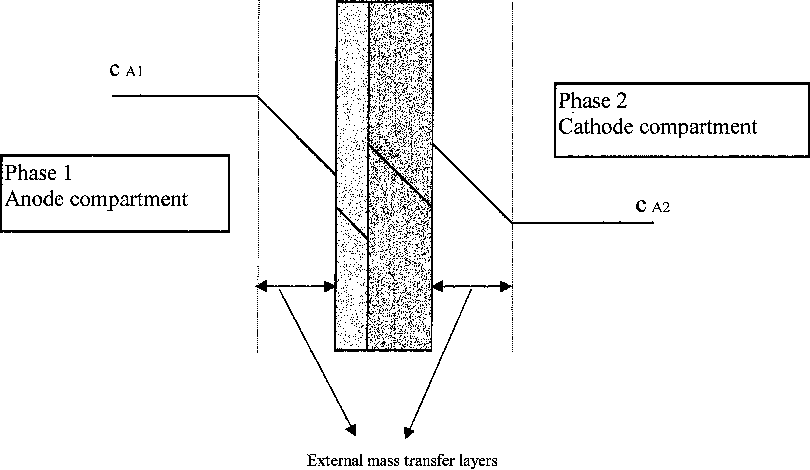 Application of the Maxwell–Stefan theory to the membrane