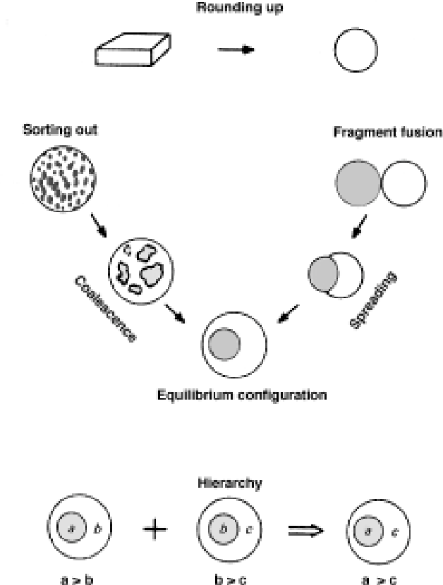 Cadherin Mediated Cell Cell Adhesion And Tissue Segregation In