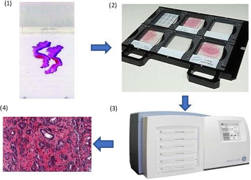 Figure 1 for A Comprehensive Review of Computer-aided Whole-slide Image Analysis: from Datasets to Feature Extraction, Segmentation, Classification, and Detection Approaches