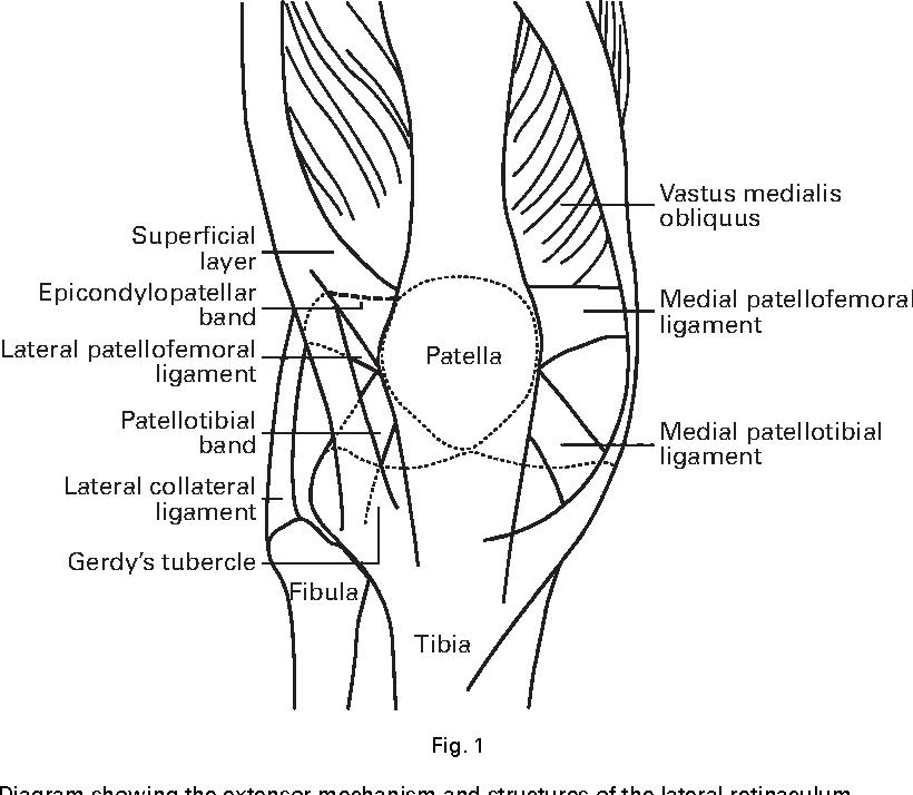 Berühmt Anatomie Von Langusten Galerie - Anatomie Ideen - finotti.info