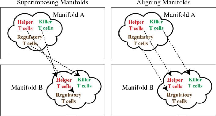 Figure 1 for MAGAN: Aligning Biological Manifolds