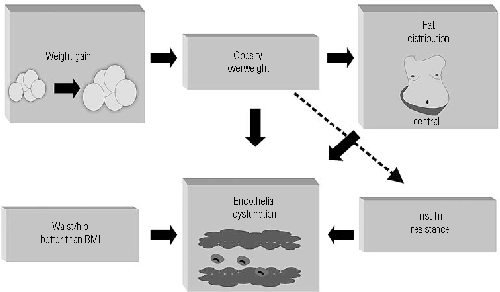 Figure 3. Relationship between endothelial dysfunction and overweight/obesity. Fat distribution plays an important role on endothelial dysfunction and waist/hip ratio might be a better correlated with it than the body mass index.