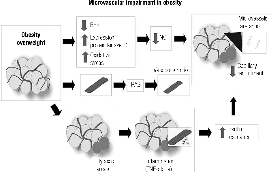 Figure 4. Microvascular dysfunction due to overweight/obesity.