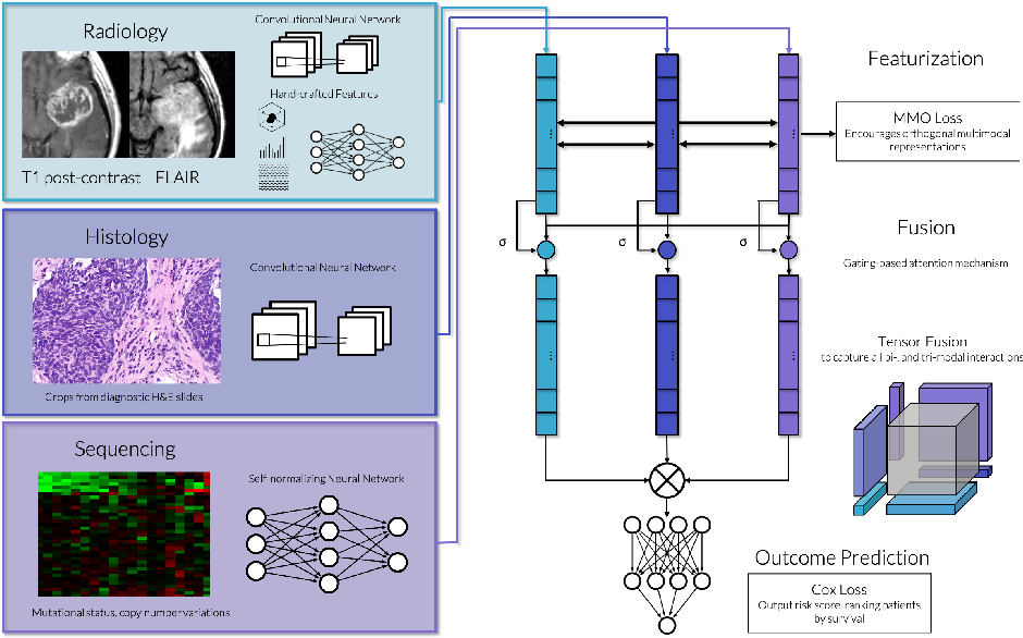Figure 1 for Deep Orthogonal Fusion: Multimodal Prognostic Biomarker Discovery Integrating Radiology, Pathology, Genomic, and Clinical Data