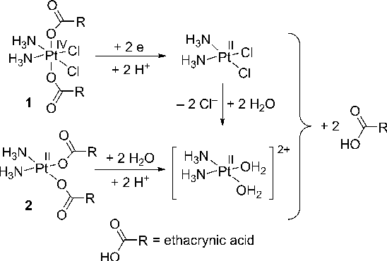 Figure 2. Proposed activation pathways for complexes 1 and 2.