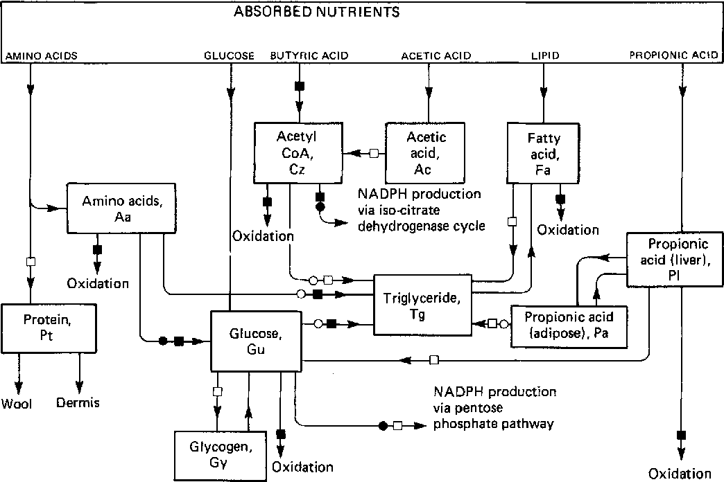 Figure I From Simulation Of The Metabolism Of Absorbed Energy