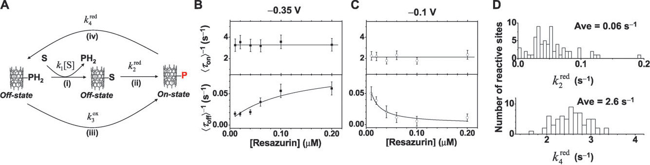Fig. 8 SWNT electrocatalytic mechanism and reactivity. (A) Schematic of the kinetic mechanism. The fluorescence state (on or off) is indicated at each stage of the reaction. S, resazurin; P, resorufin; PH2, dihydroresorufin. (B, C) Resazurin concentration dependences of htoni 1 and htoffi 1 of two reactive sites, each at a different potential. Solid lines are fits with eqn (4a) and (4b). (D) Distributions of kred2 and k red 4 from many SWNT reactive sites at 0.35 V. Figures adapted with permission from Xu et al.;8 Copyright 2009 American Chemical Society.