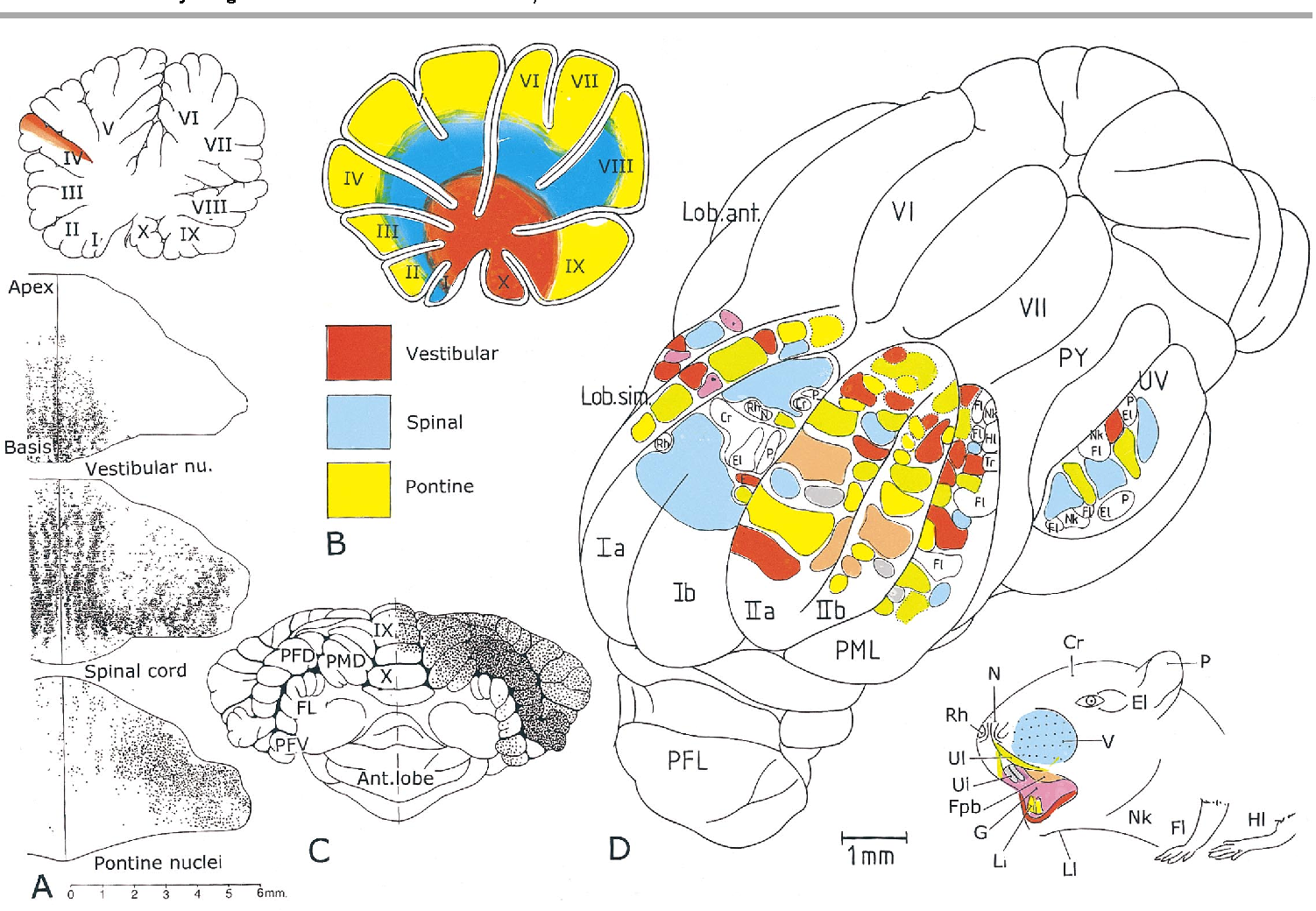 Figure 4 from The anatomy of the cerebellum. - Semantic Scholar