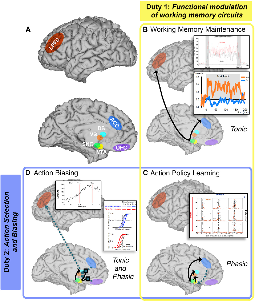 Figure 2 from Dopamine Does Double Duty in Motivating