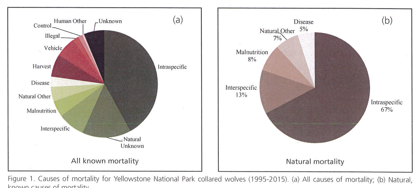 PDF] Territoriality and Inter-Pack Aggression in Gray Wolves