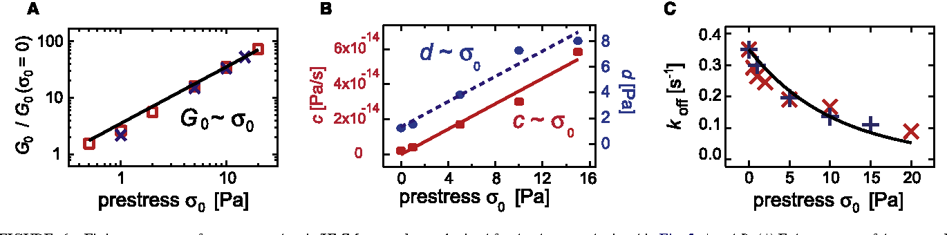 FIGURE 6 Fitting parameters for prestressed actin/HMM networks as obtained for the data sets depicted in Fig. 5, A and B. (A) Enhancement of the network elasticity G0/G0(s0 ¼ 0) as a function of prestress s0. A linear relation is observed for both cross-linker densities (R ¼ 0.1 (squares) and R ¼ 0.2 (crosses)). (B) Stress relaxation parameter c and single filament relaxation parameter d increase linear with the prestress s0. (C) Cross-linker off-rate koff as a function of prestress for two different actin/HMM networks (R ¼ 0.1 ( ) and R ¼ 0.2 (þ)).