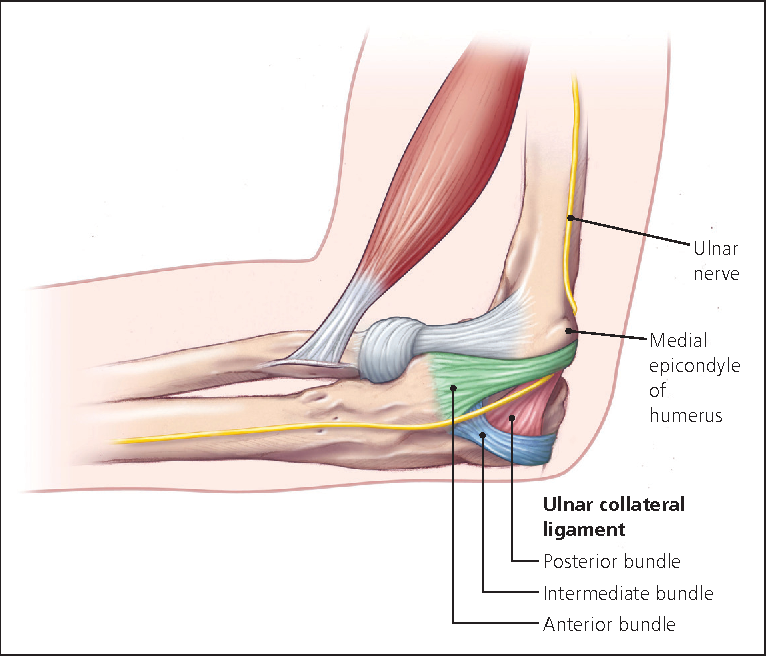 Figure 3 From Evaluation Of Elbow Pain In Adults Semantic Scholar