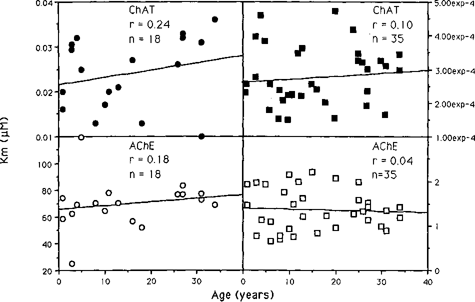 Fig. 1. Km (left panels) and Vmax/mg (right panels) for ChAT (top panels) and AChE (bottom panels) as a function of age in rhesus monkey ciliary muscle. No parameter correlates with age.