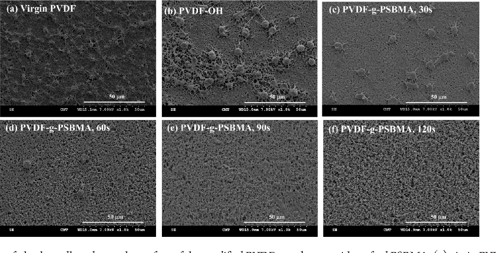 Figure 8 SEM Images Of Platelets Adhered Onto The Surface Modified PVDF Membranes