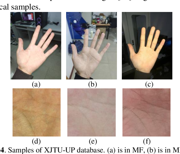 Figure 4 for A Joint Pixel and Feature Alignment Framework for Cross-dataset Palmprint Recognition