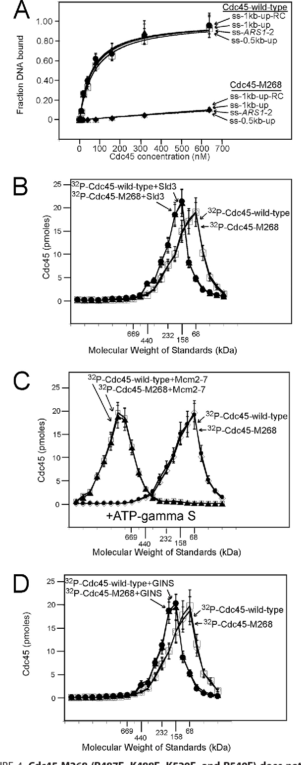 Cdc45 protein-single-stranded DNA interaction is important