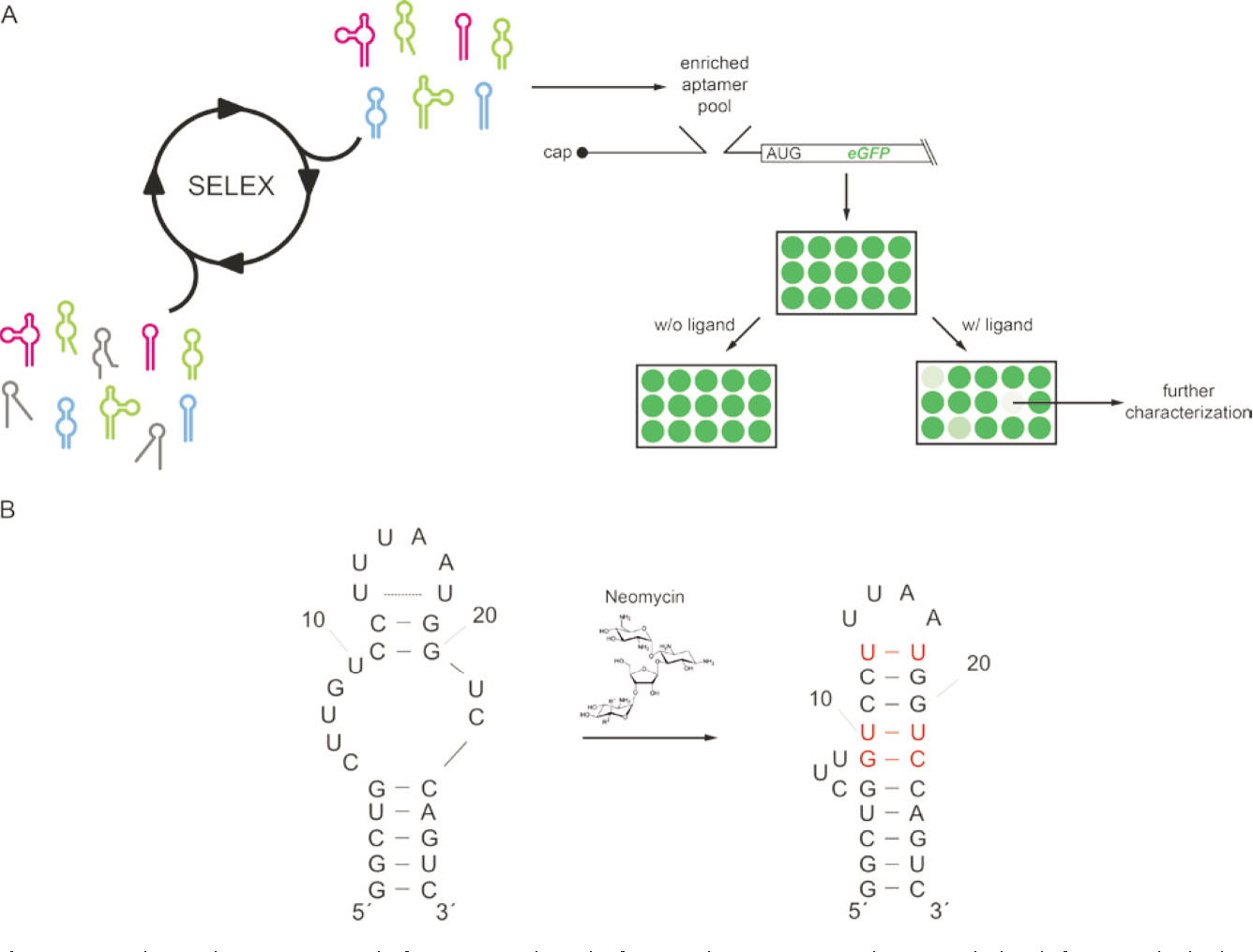 Figure 1 From Rna Aptamers As Genetic Control Devices The Potential Basis Of Different Regulator Types Principles Circuit 3