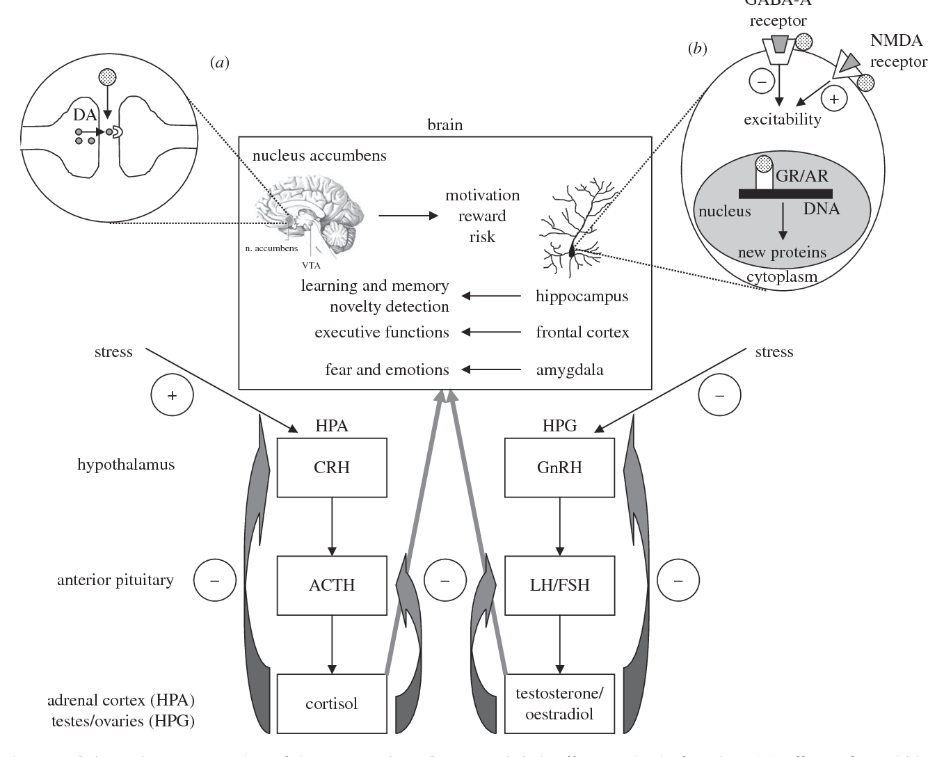 Figure 1 From From Molecule To Market Steroid Hormones And