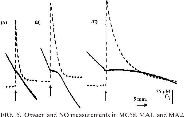 Figure 5 from and meningitidis neisseria nitric oxide metabolism in figure 5 ccuart Image collections