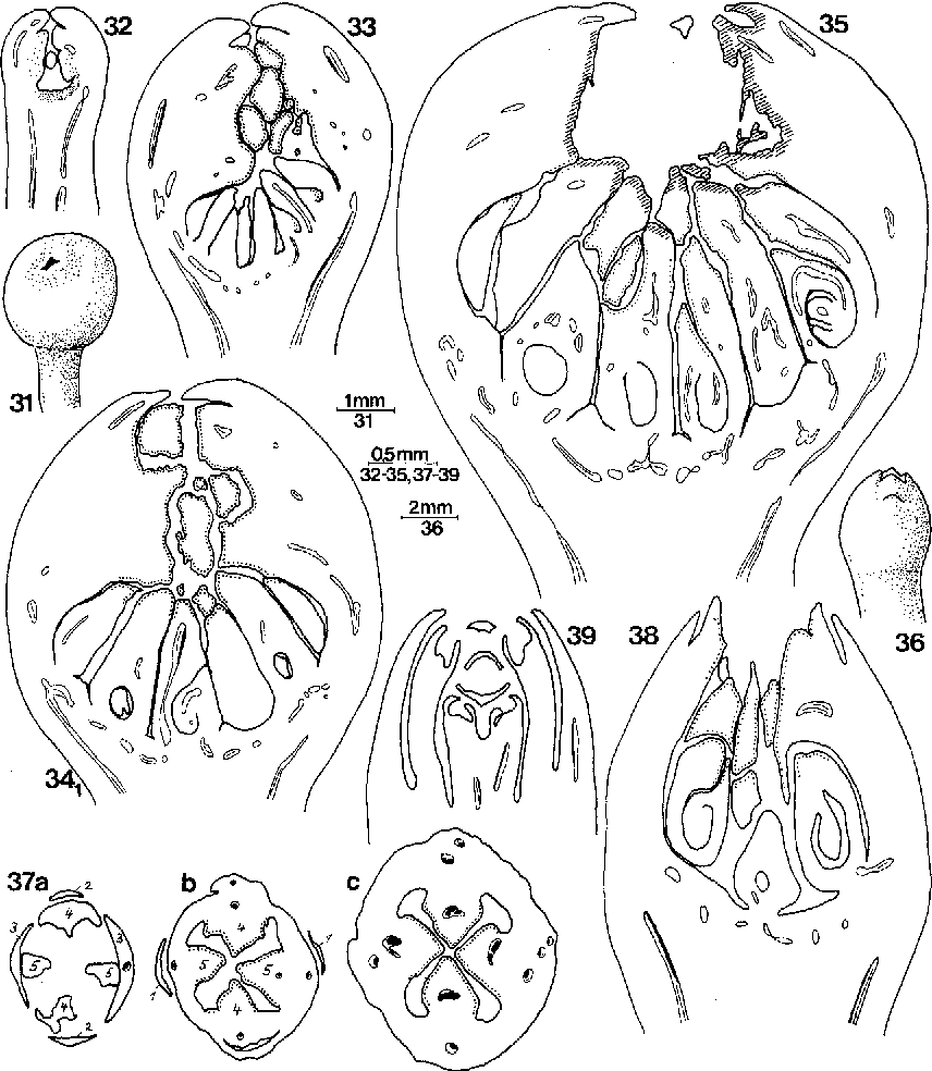 figure 341