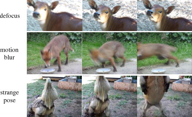 Figure 3 for Impression Network for Video Object Detection
