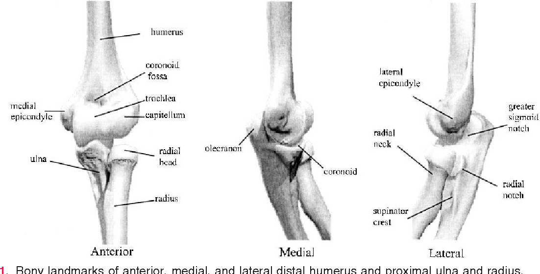 Figure 1 from Anatomy and biomechanics of the elbow joint ...