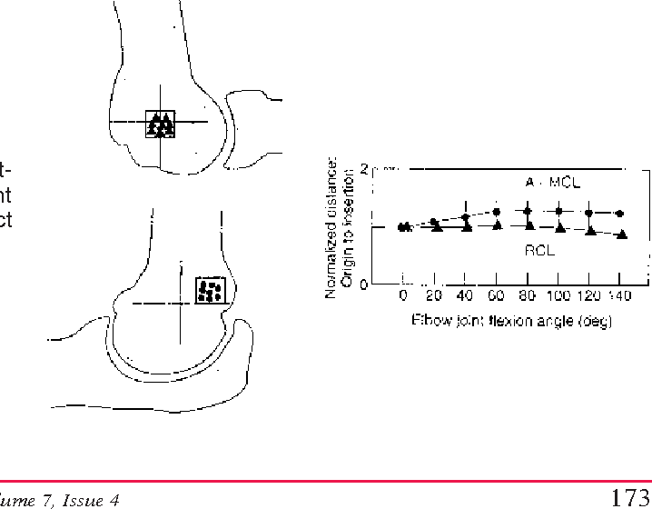 Figure 8 from Anatomy and biomechanics of the elbow joint ...